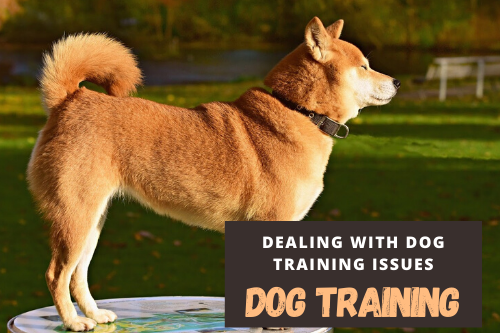 Shiba Inu Dog Park Training