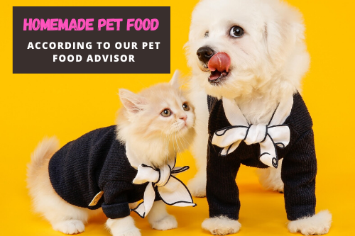 Dog and cat wearing clothes