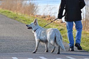 dog Leash training