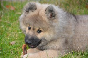 Baby puppy chewing