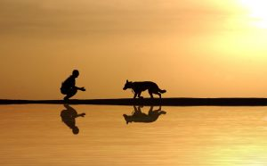beautiful sunset with dog and master
