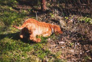Dog digging to escape