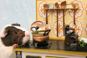 Hamster cooking a meal
