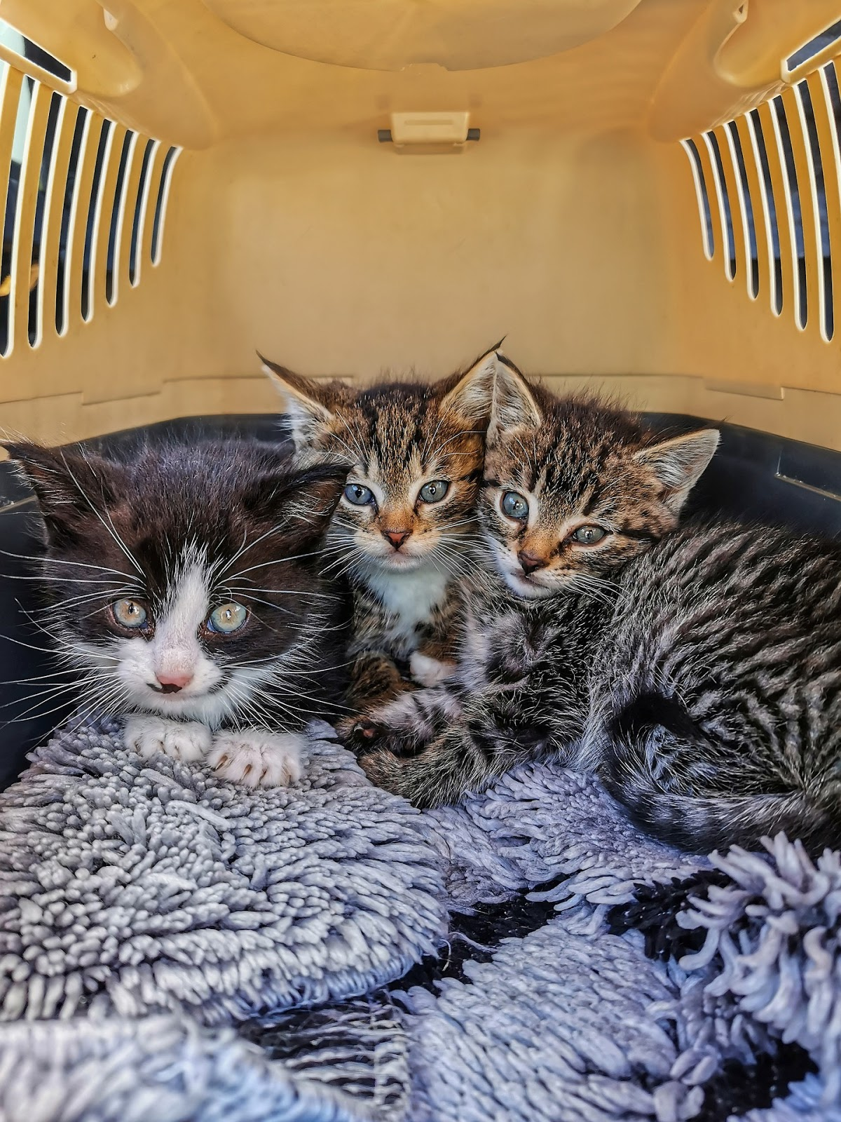 Little cats in carrier