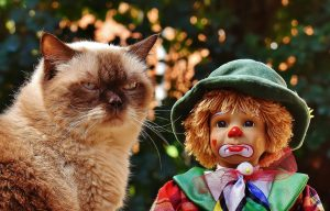 Angry cat with doll