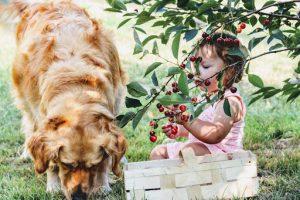 Dog babysitting little girl